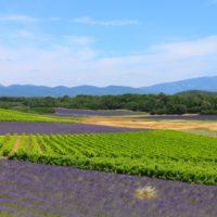 Déguster les vins de nos vignobles