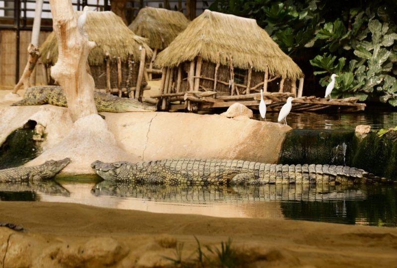 La ferme aux crocodiles à Pierrelatte - 15