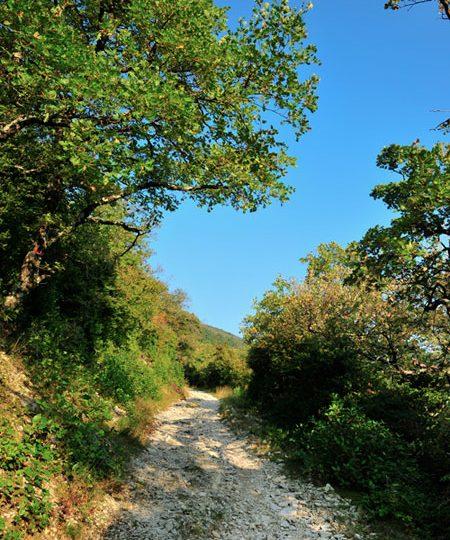 Forêt de Marsanne à Marsanne - 2