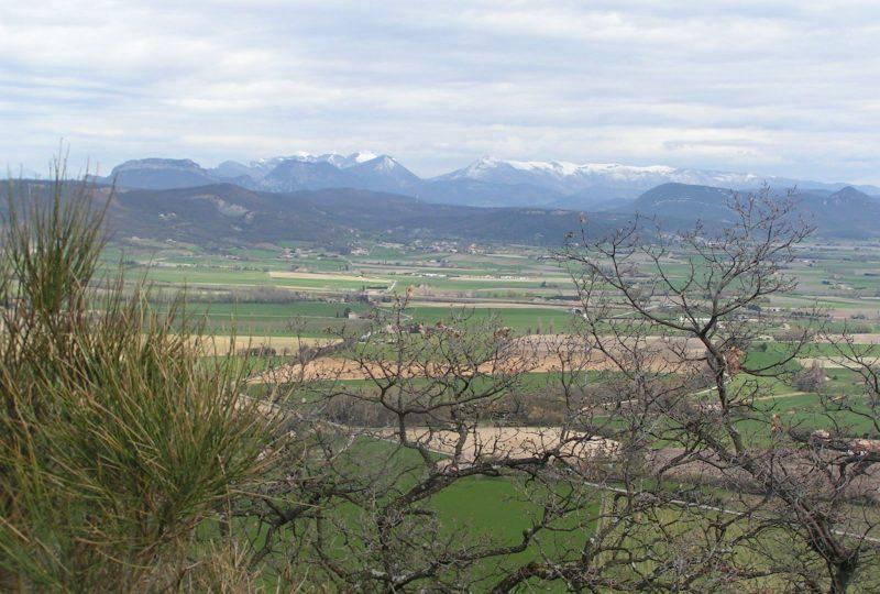 Forêt de Marsanne à Marsanne - 3