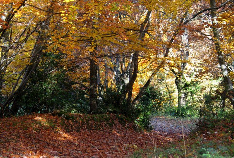 Forêt de Marsanne à Marsanne - 4