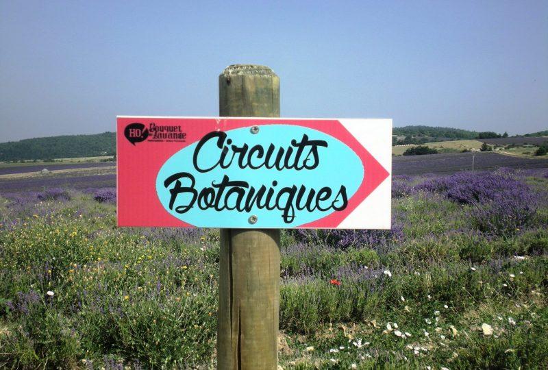 Sentier botanique des lavandes à Ferrassières - 2