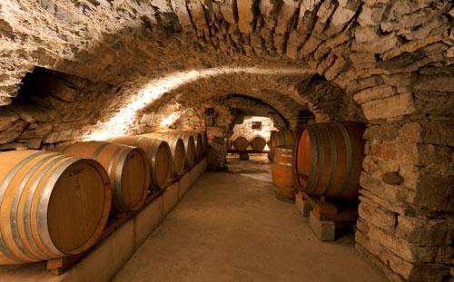 Sous l'olivier, la vigne à Condorcet - 3