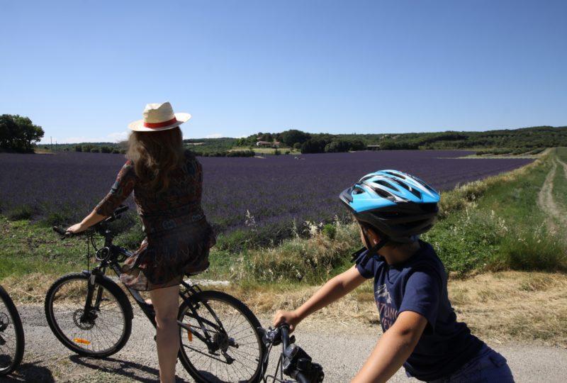 Escapade à Vélo autour de la lavande à Grignan - 1