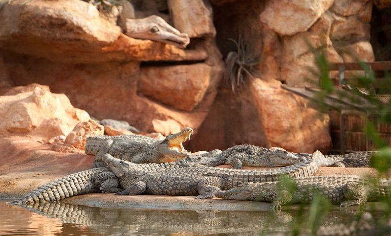 La ferme aux crocodiles à Pierrelatte - 8