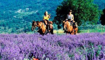 Les Ecuries de la Drôme provençale