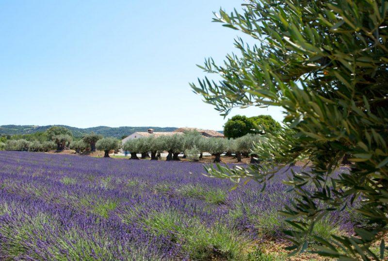 L'O Provençale à Saint-Pantaléon-les-Vignes - 5
