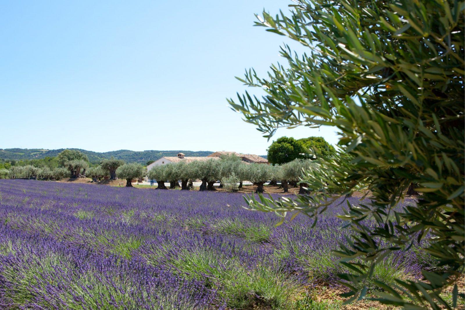 L'O Provençale