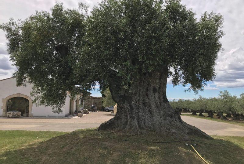 L'O Provençale à Saint-Pantaléon-les-Vignes - 8