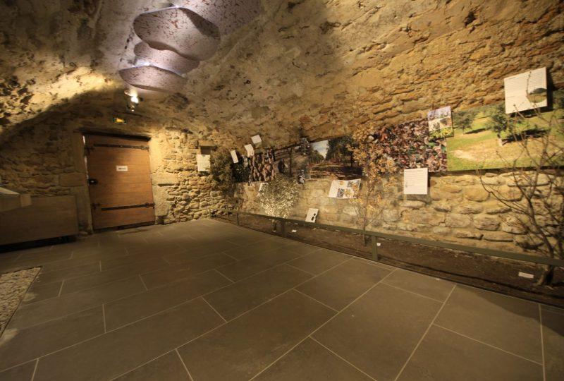 Musée de la truffe et du vin à Richerenches - 0