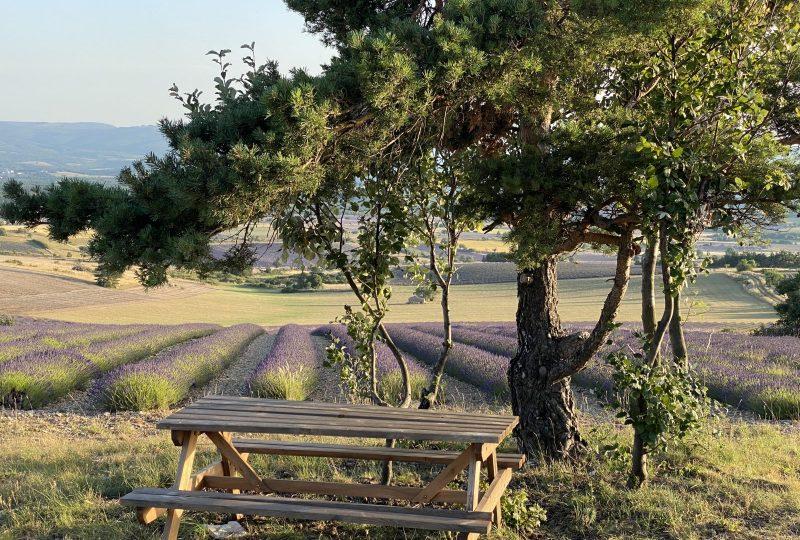 Sentier botanique des lavandes à Ferrassières - 8