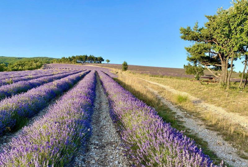Sentier botanique des lavandes à Ferrassières - 6