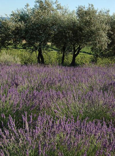 Escale «Plantes et Bien-Être» : Nyons / Buis-les-Baronnies à Buis-les-Baronnies - 0