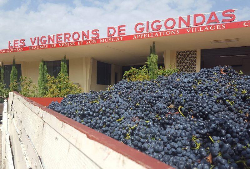 Gigondas la Cave à Gigondas - 10